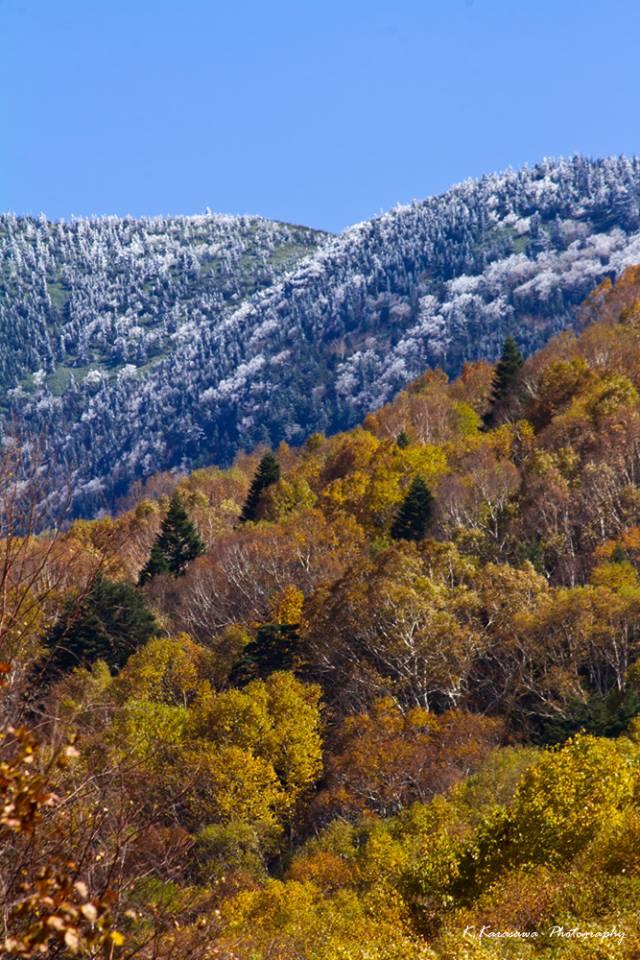岩菅山の貴重な三段紅葉です!