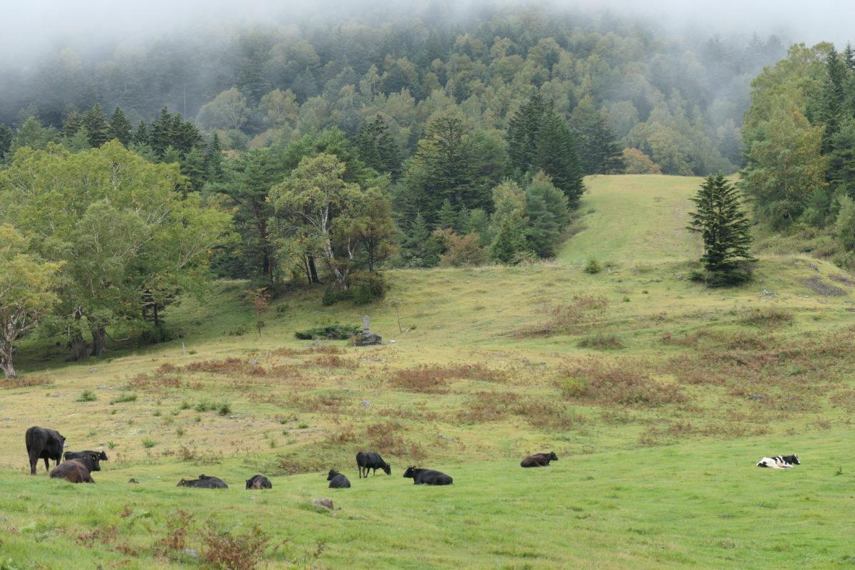 山田牧場はのどかな風景が広がっています。