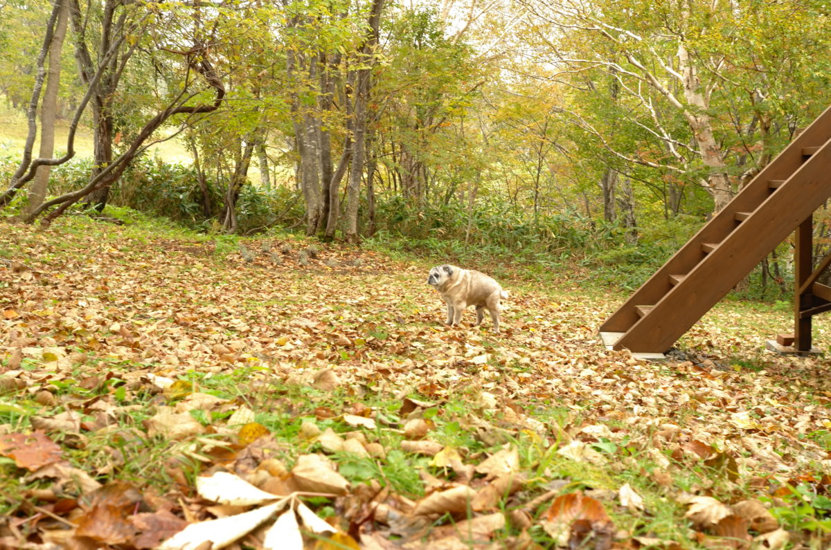 テンボ君もテゾーロの秋が大好きです。