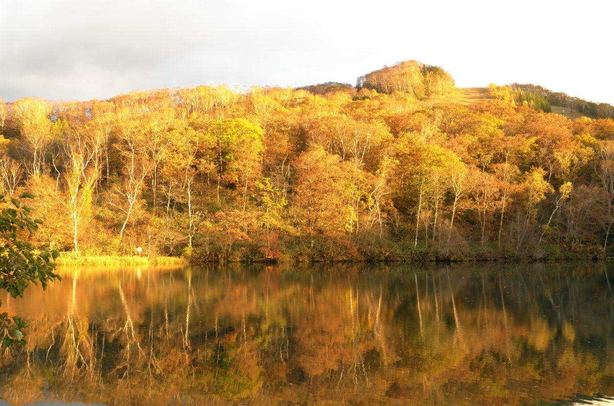 夕暮れ時、丸池の紅葉と出会いました。
