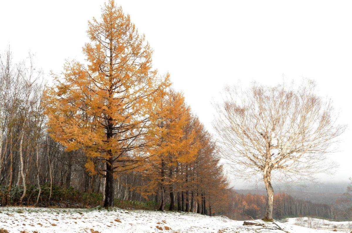 テゾーロ裏手では初雪と紅葉が共存。