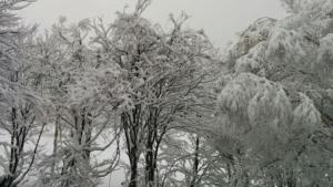 今週は雪マーク続きです