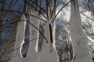 オードヴィーの木々達