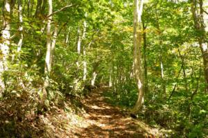森林セラピー 白樺苑路な旅