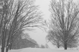天然雪は変わらず