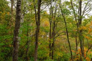 深い秋、それぞれの秋・・・