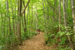 森林セラピーロードを歩こう