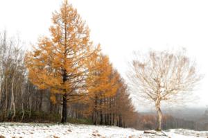 木々達の声