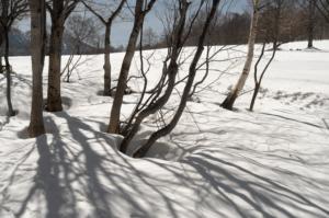 春を浴びる、木々達の歓び。