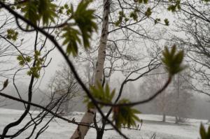 半袖じゃ寒い!雪が舞う舞う。