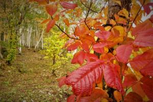 奥志賀で小さい秋、出会いました。