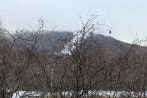 明日は、志賀高原スキー場開き。