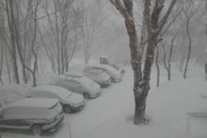 朝6時、雪、降ってます!
