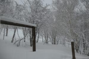 昨夜からも、雪が延々と。