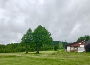芝の緑が映えるこの頃です。