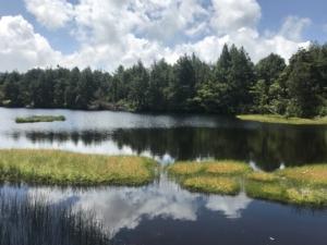志賀高原の夏を歩こう。
