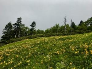 高山植物が見頃です。