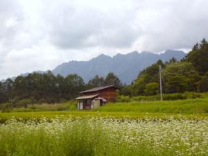 蕎麦の花、戸隠。