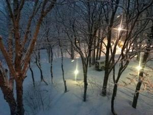 雪が静かに降ってます。