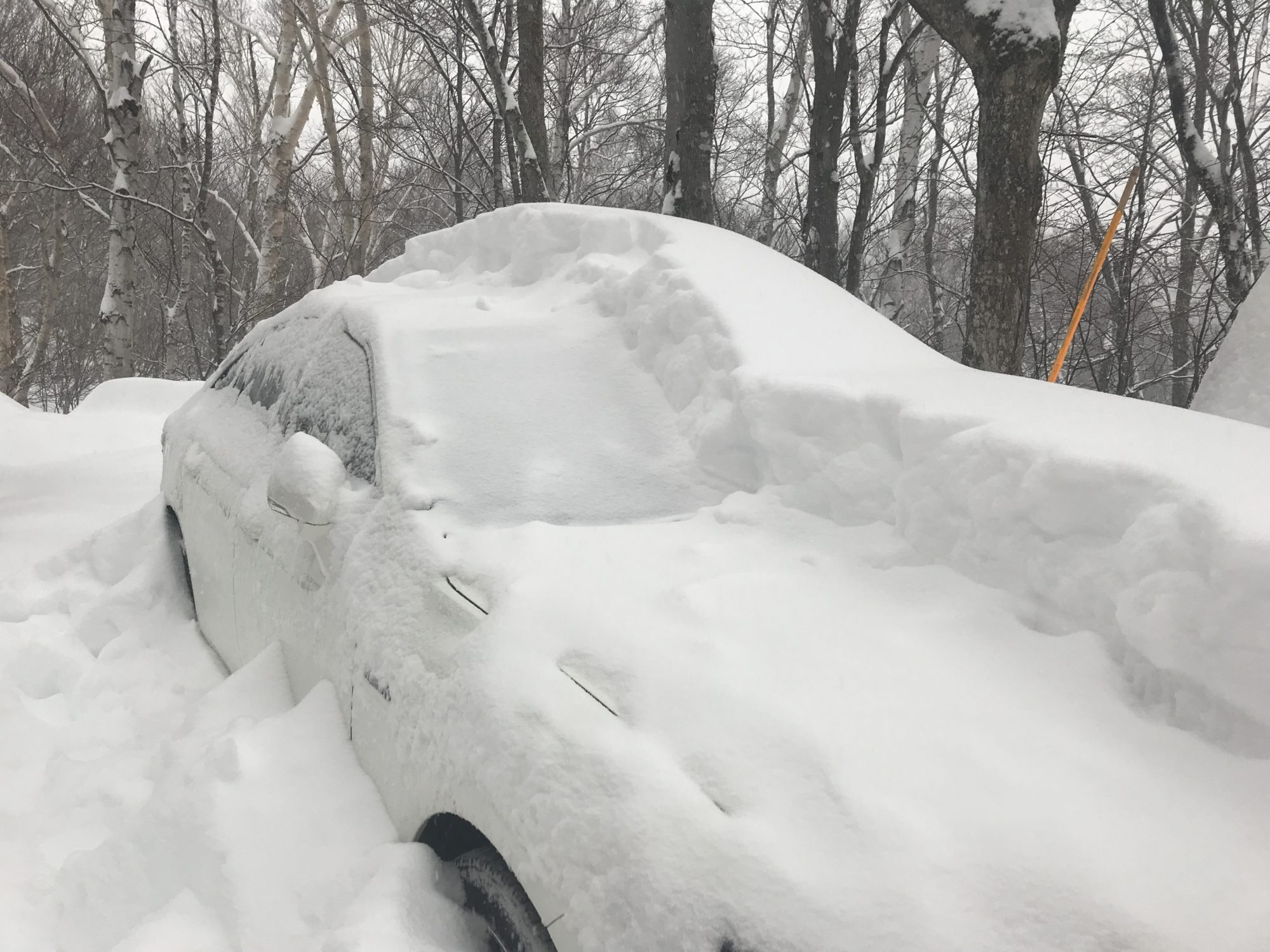 2020 feb 豪雪にモヒカン!