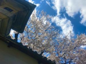 春の善光寺さんへ。