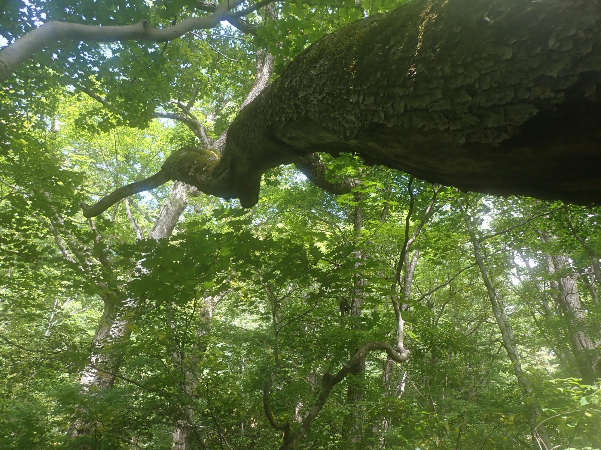 2020 Sep とにかく美しい原生林、奥志賀渓谷