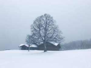 来週の寒波に期待しよう。