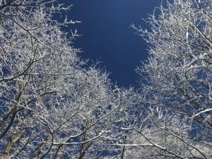 奥志賀の樹氷。